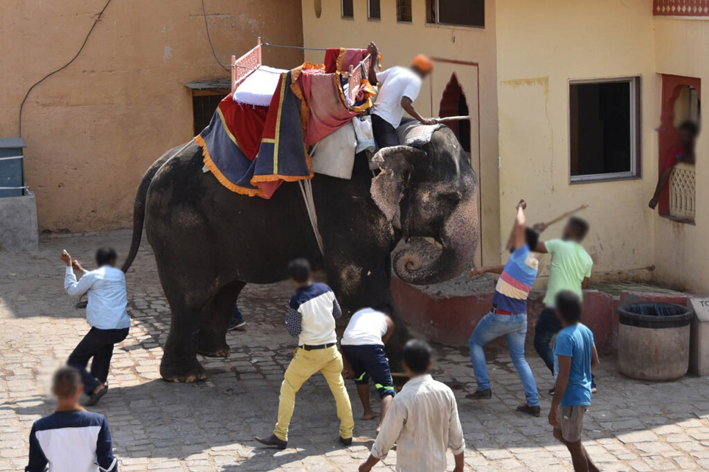Menschen stehen um einen und sitzen auf Elefanten