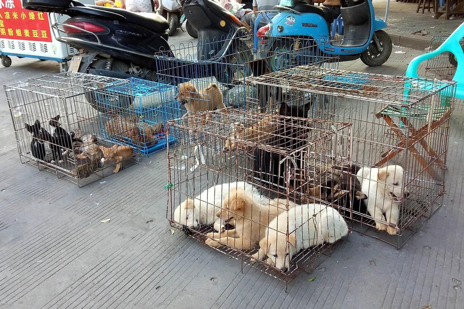Werden In China Wirklich Hunde Und Katzen Gegessen