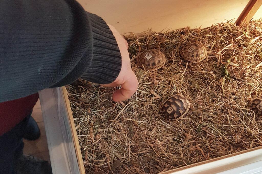 Person greift in Box mit Tieren