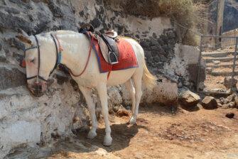 Eselreiten auf Santorini beenden