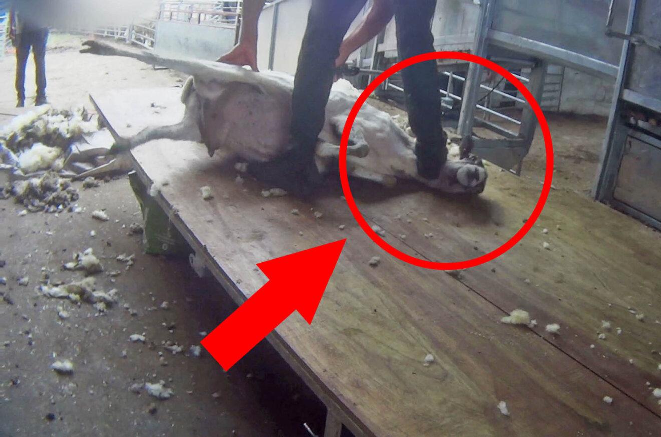 Aufnahmen in Wollproduktion