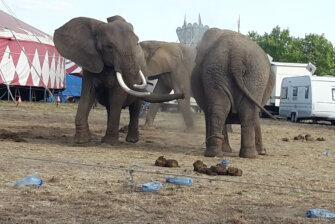 Erlebnispark Starkenberg, ehem. Circus Afrika - Chronik