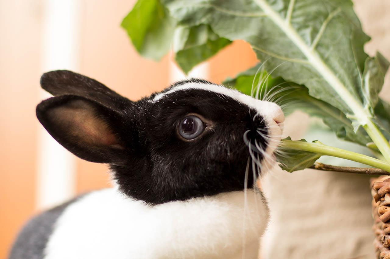 13 spannende fakten ber kaninchen die sie noch nicht kannten. Black Bedroom Furniture Sets. Home Design Ideas