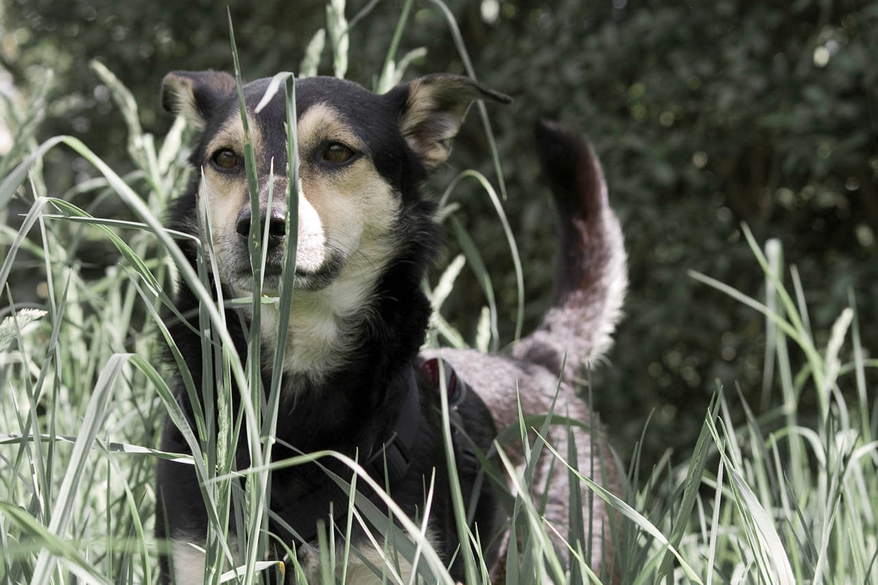 Granne beim Hund: So ersparen Sie Ihrem Hund viel Leid