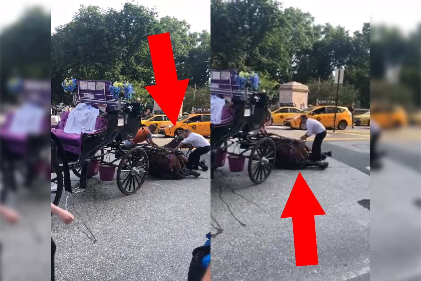 Video: Pferd bricht in New York City auf offener Straße zusammen