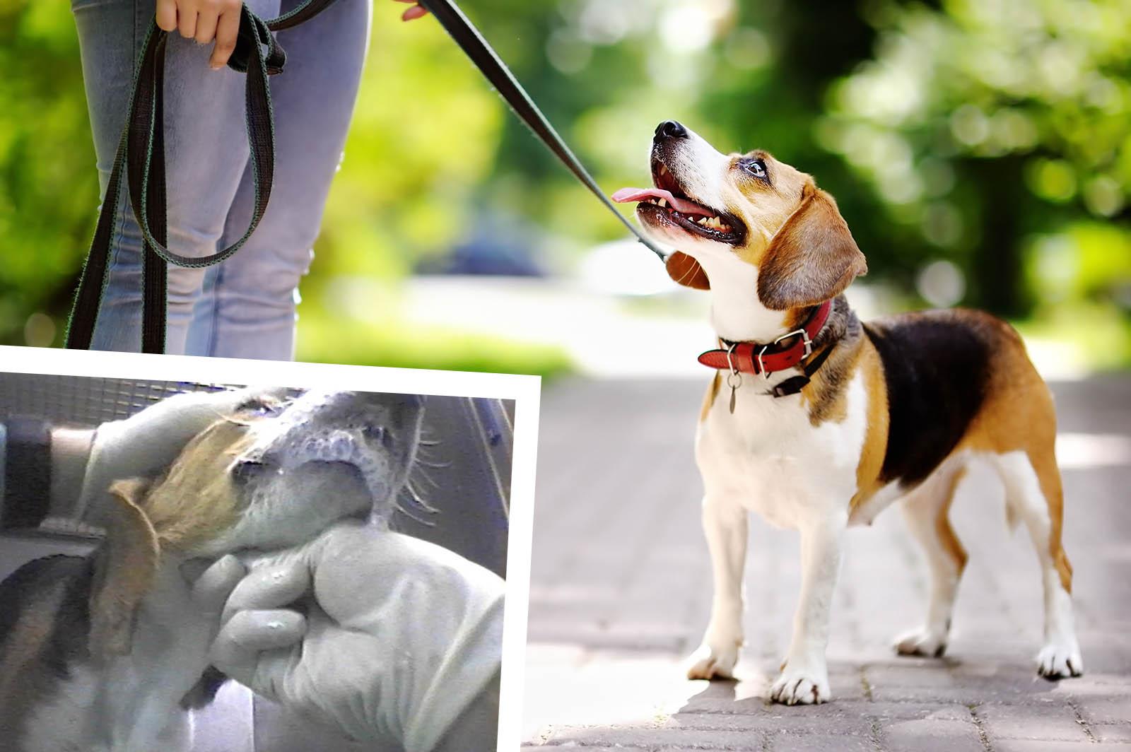 Hunde Im Labor Missbraucht So Konnen Sie Die Hunde Retten