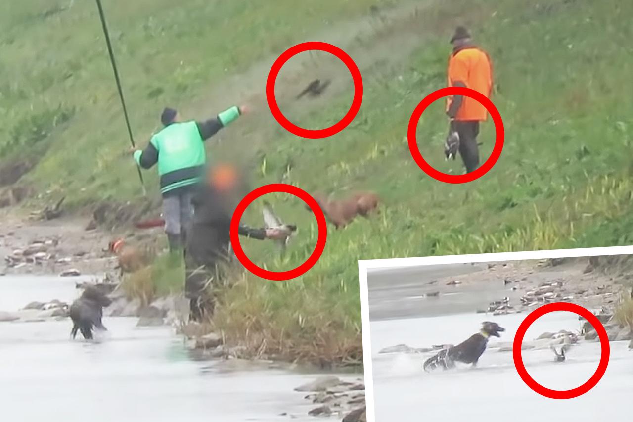 JAGD-VIDEO: Enten ausgesetzt, gebissen und brutal getötet