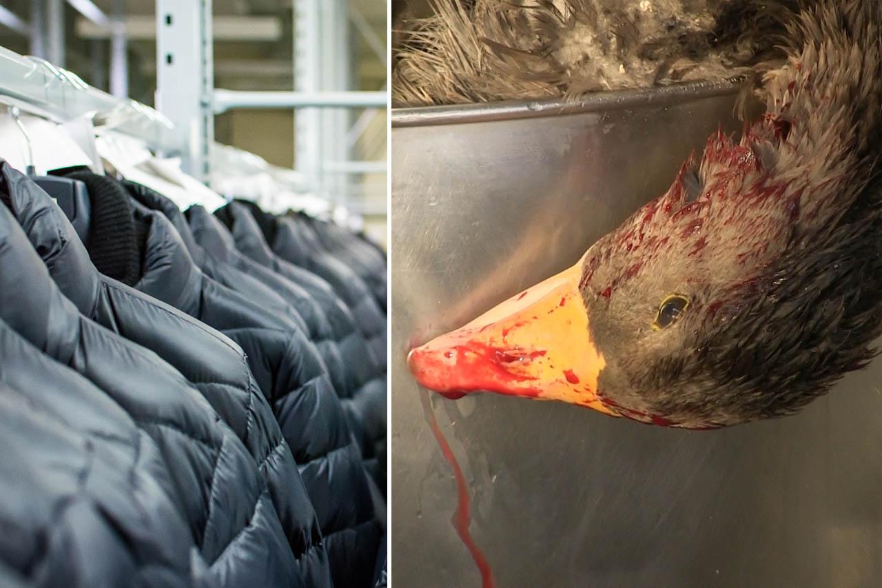 Verweste Körperteile toter Vögel in Daunenjacken entdeckt