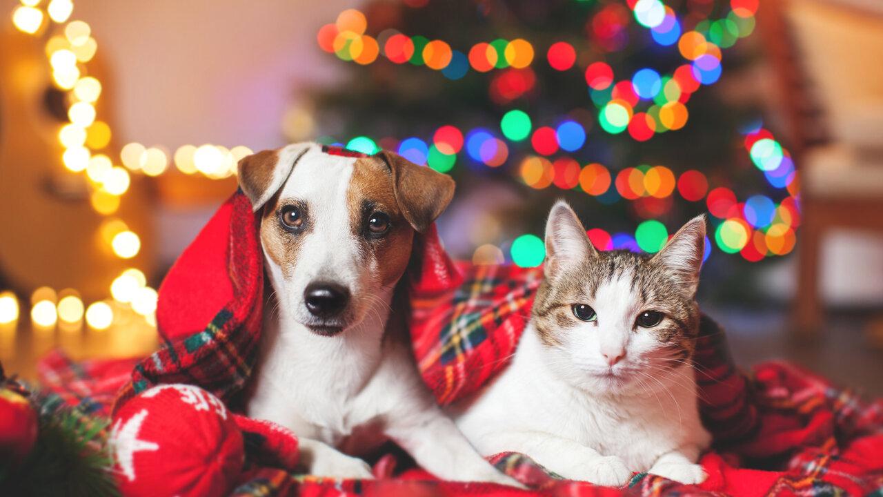 Hund und Katze vorm Weihnachtsbaum
