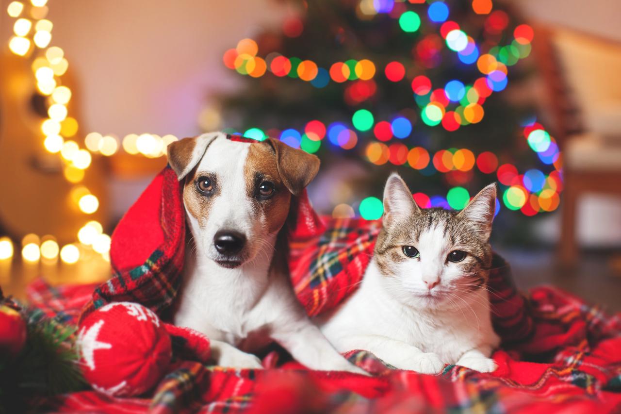 Weihnachtsbaum für Katzen und Hunde sicher machen: 6 Tipps