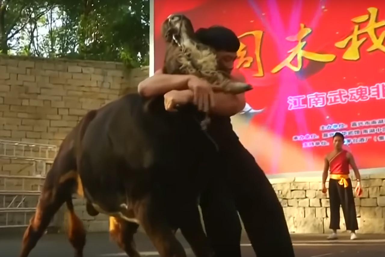 Video: So sehen Stierkämpfe in China aus