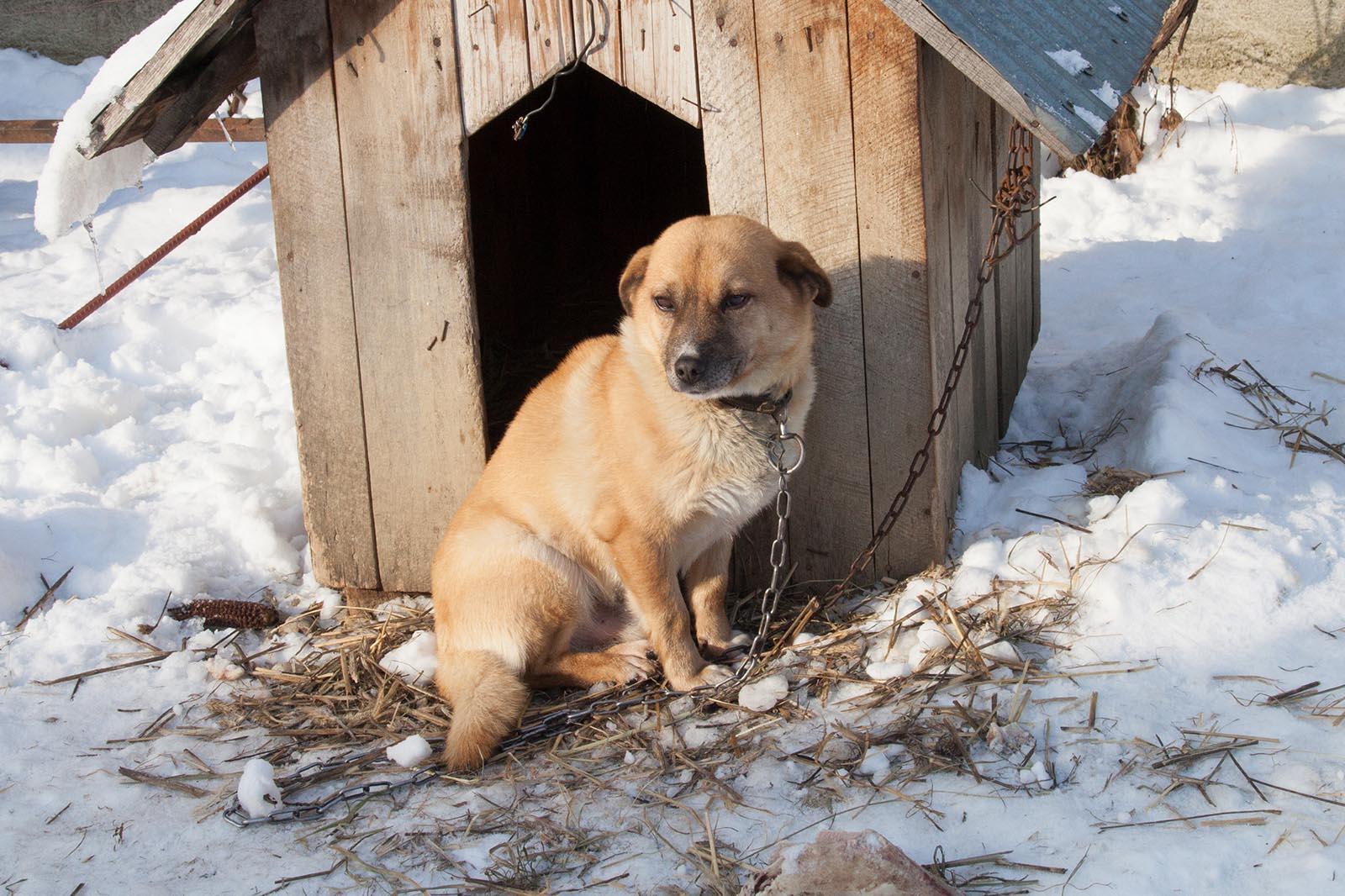 Hund im Schnee vor Hundehuette