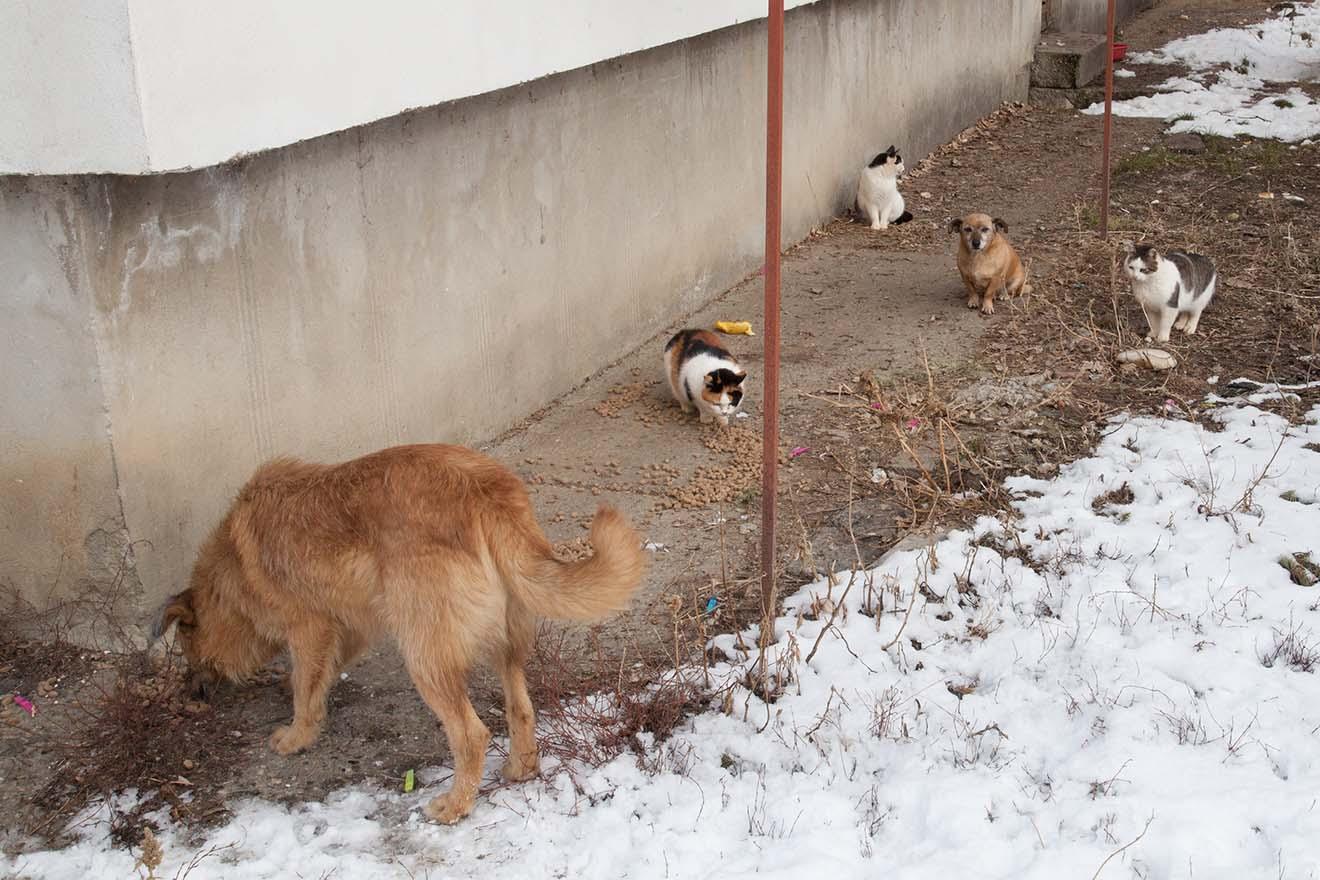 Heimatlose Hunde und Katzen in Rumänien