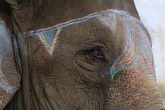 Elefantenfestival in Nepal beenden