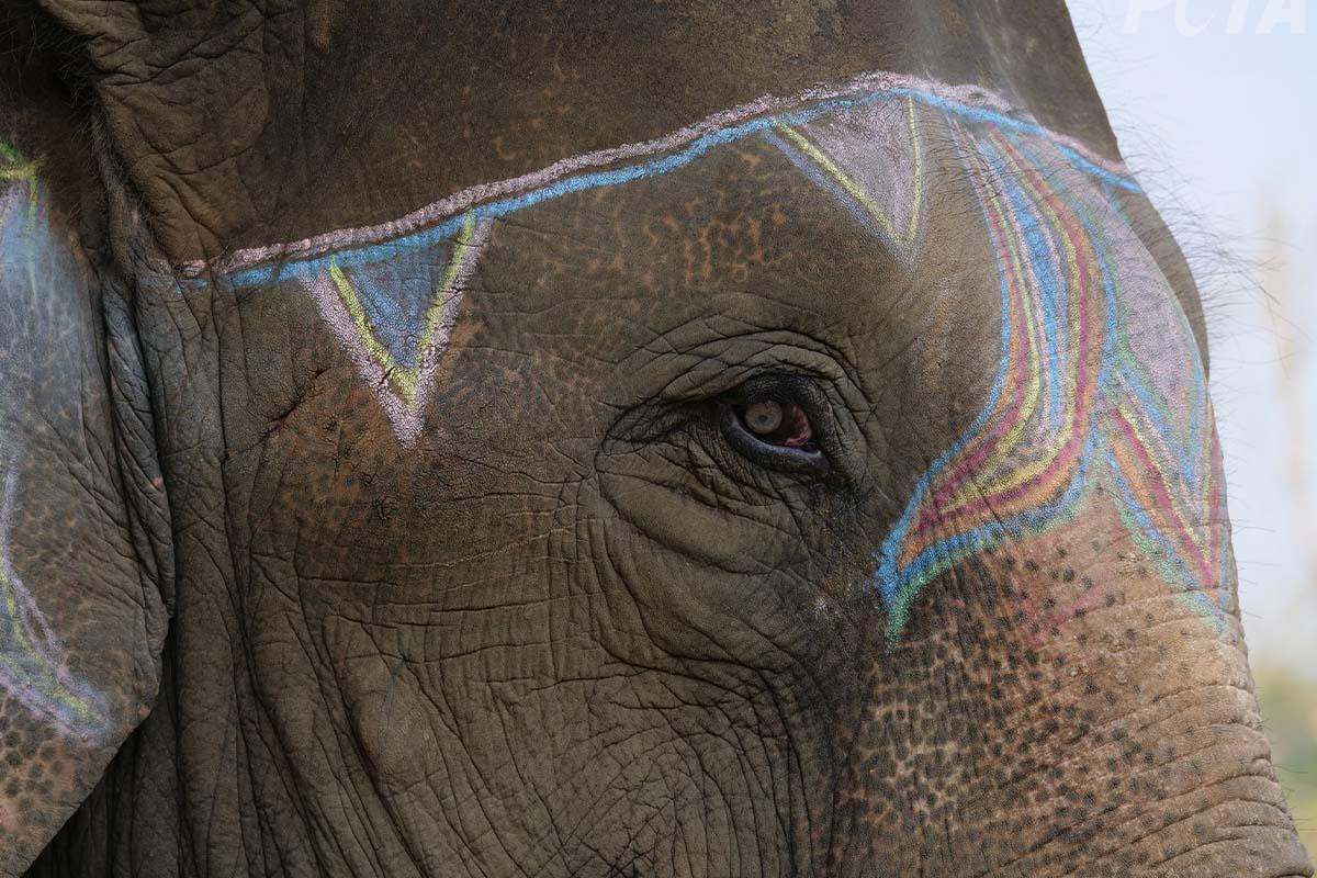Elefantenfestival in Nepal beenden – jetzt unterschreiben!