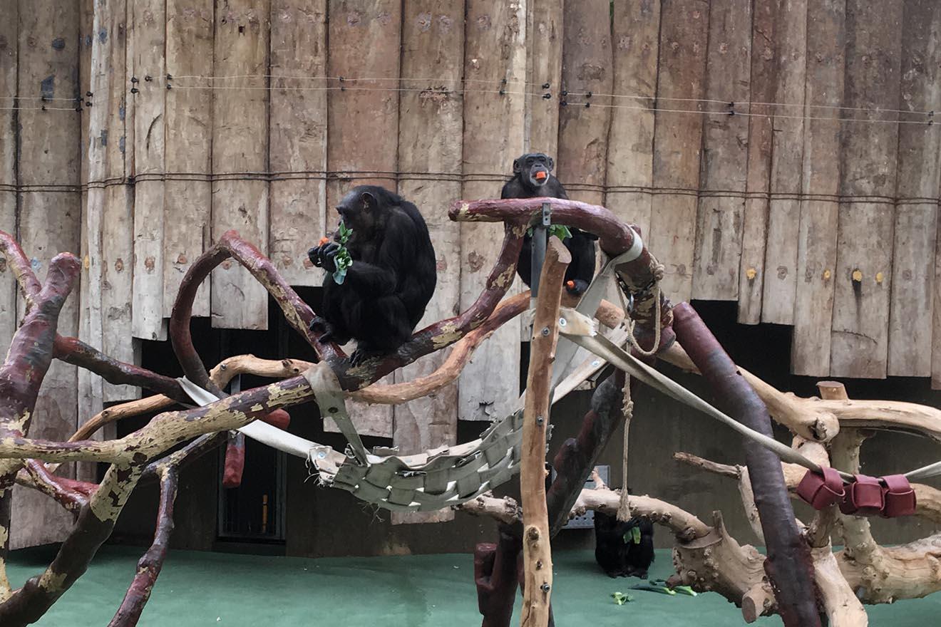 Petition: Kein neues Affen-Gefängnis im Krefelder Zoo!