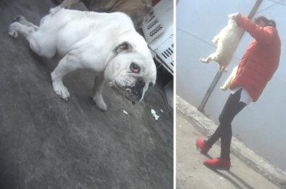 Mann haelt Hund an den Hinterbeinen