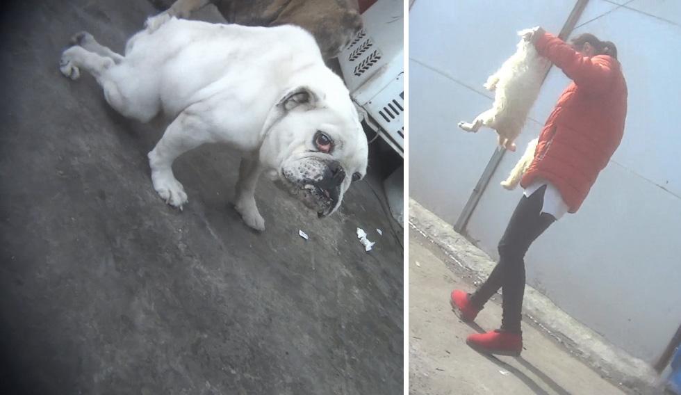 PETA-Augenzeuge deckt Welpenhorror in China auf