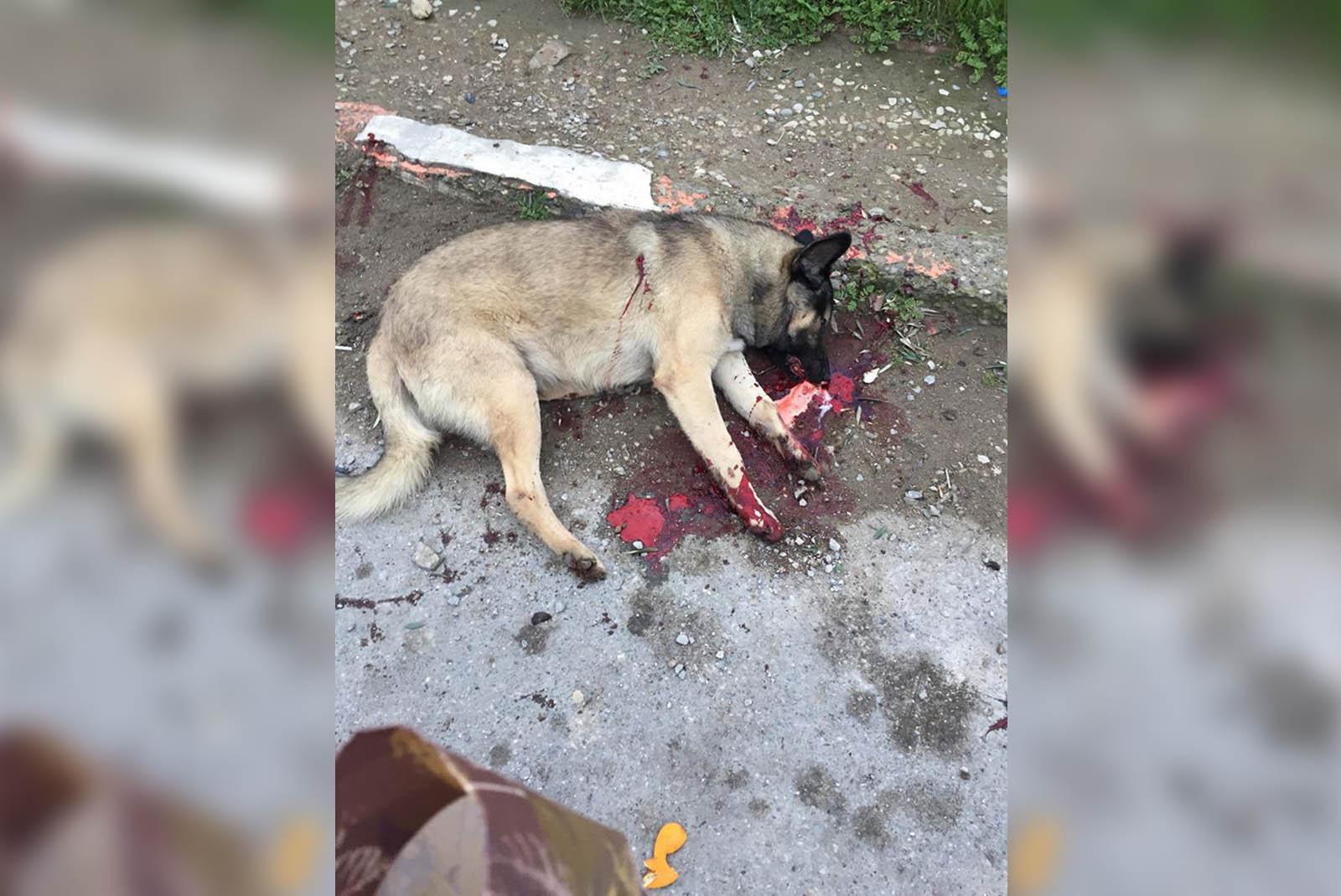 Tötung von Straßenhunden in Aserbaidschan beenden: Jetzt helfen!