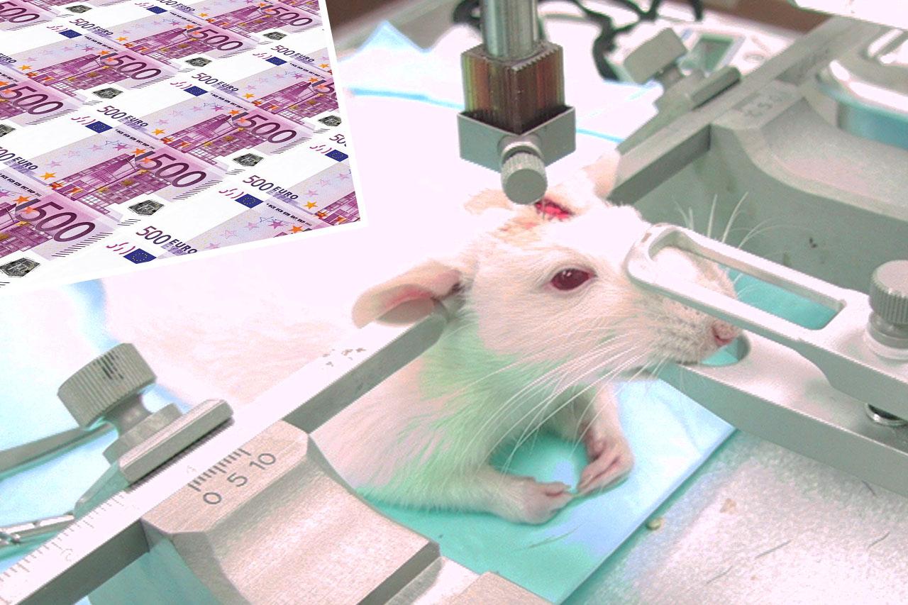 Die DFG fördert unzählige Tierversuche mit Steuergeldern – protestieren Sie jetzt!