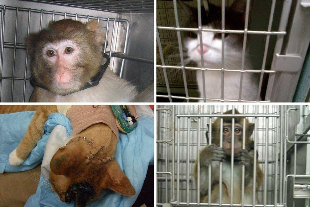 Diese 8 Experten-Zitate zeigen: Tierversuche sind unzuverlässig