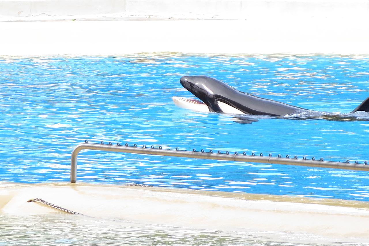 Huffington Post löscht positive Artikel über Loro-Parque Orca-Haltung