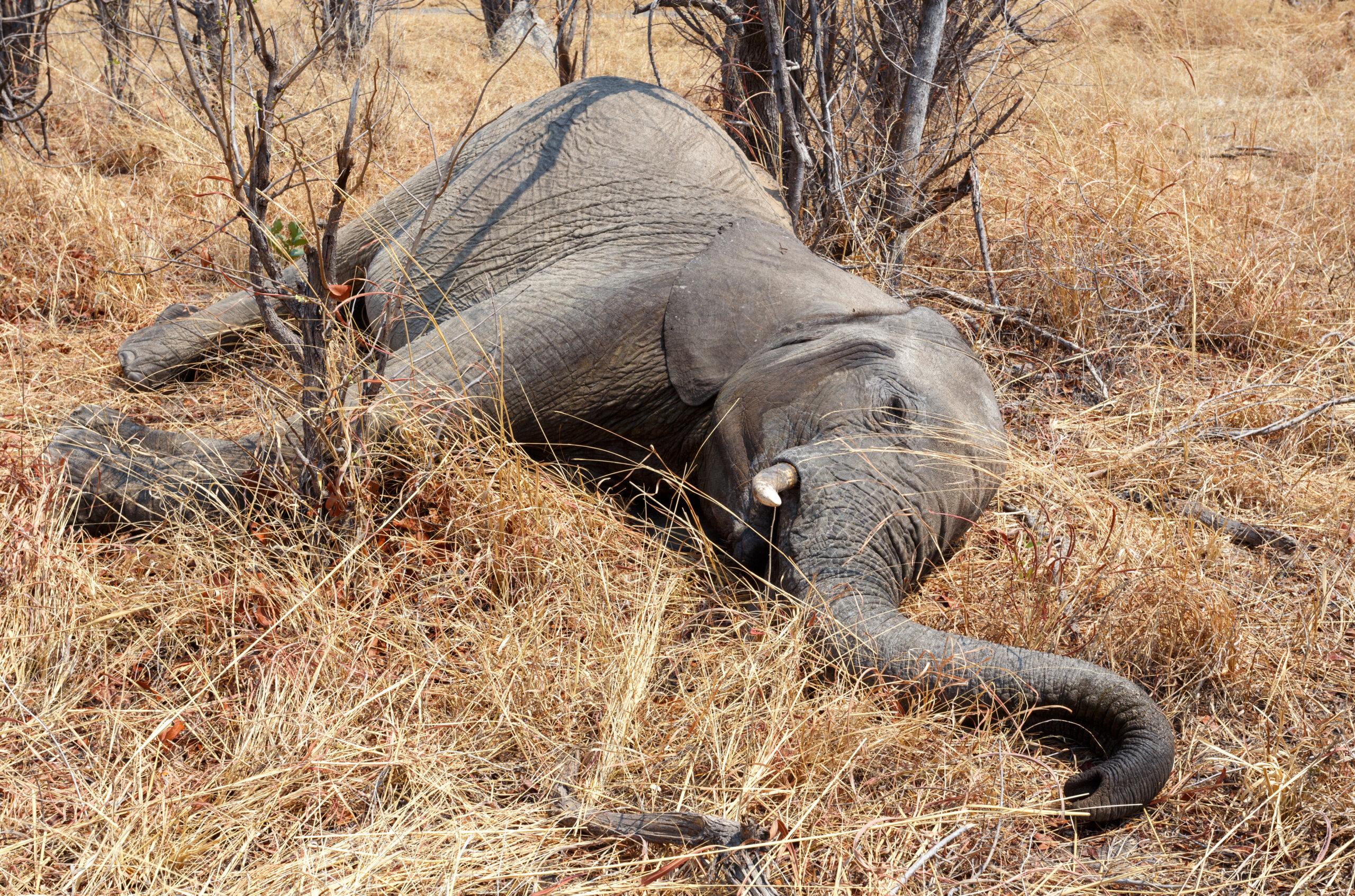 Dieser Jäger hat 5.000 Elefanten getötet und bereut nichts