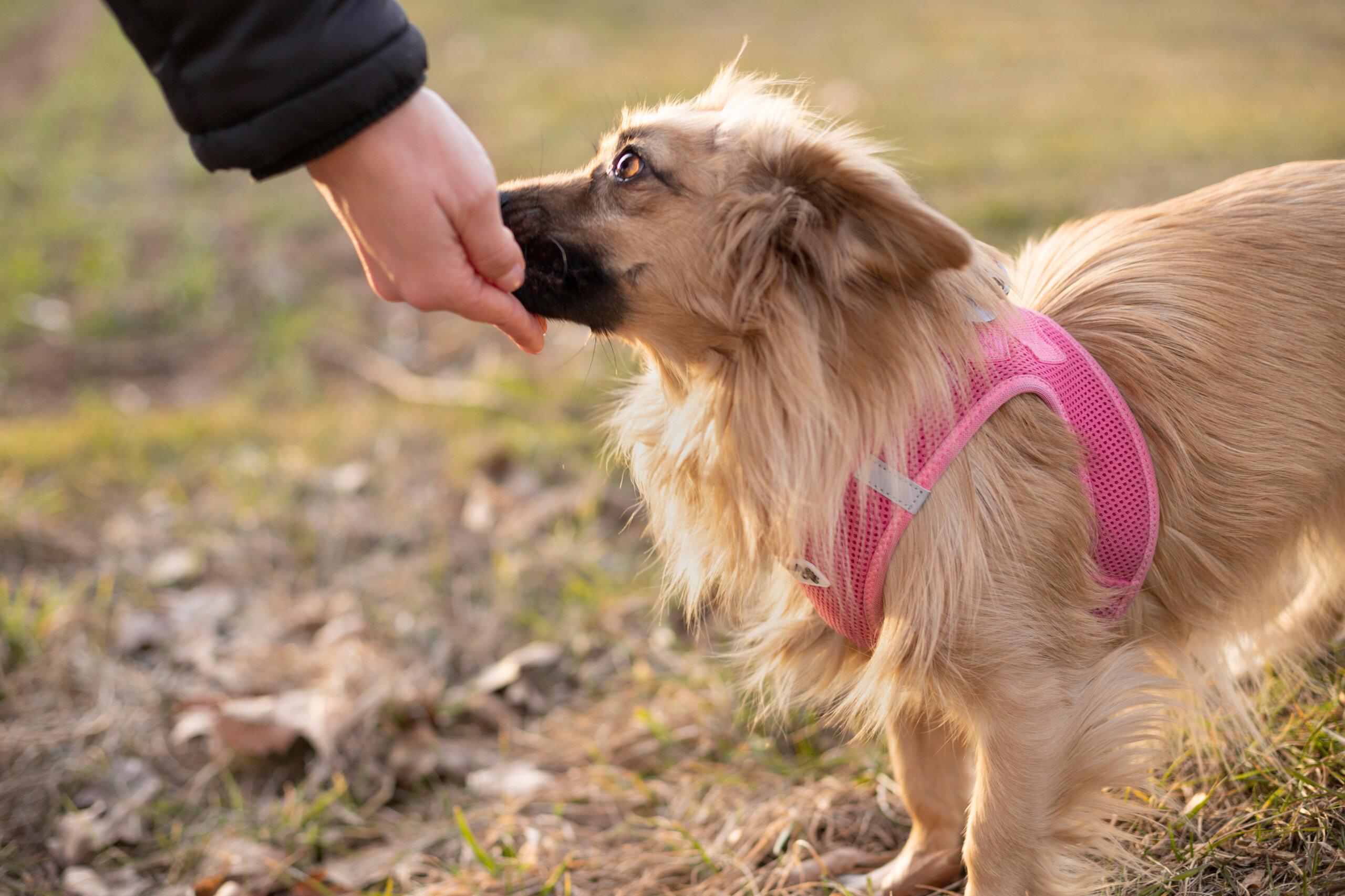 9 Tipps: So finden Sie eine seriöse Hundeschule