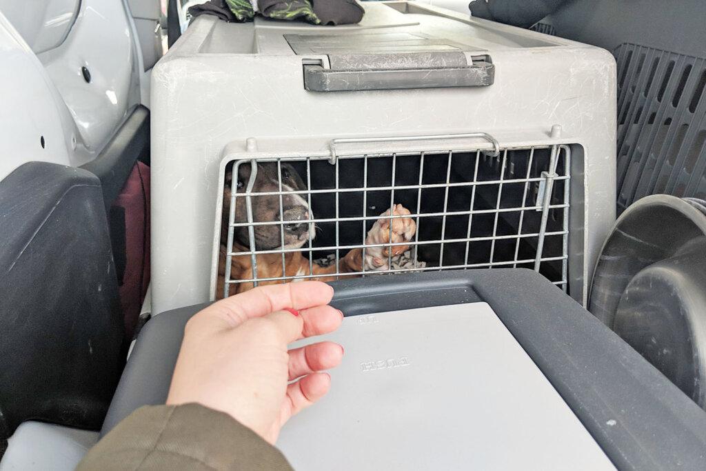 welpen in einer hundebox