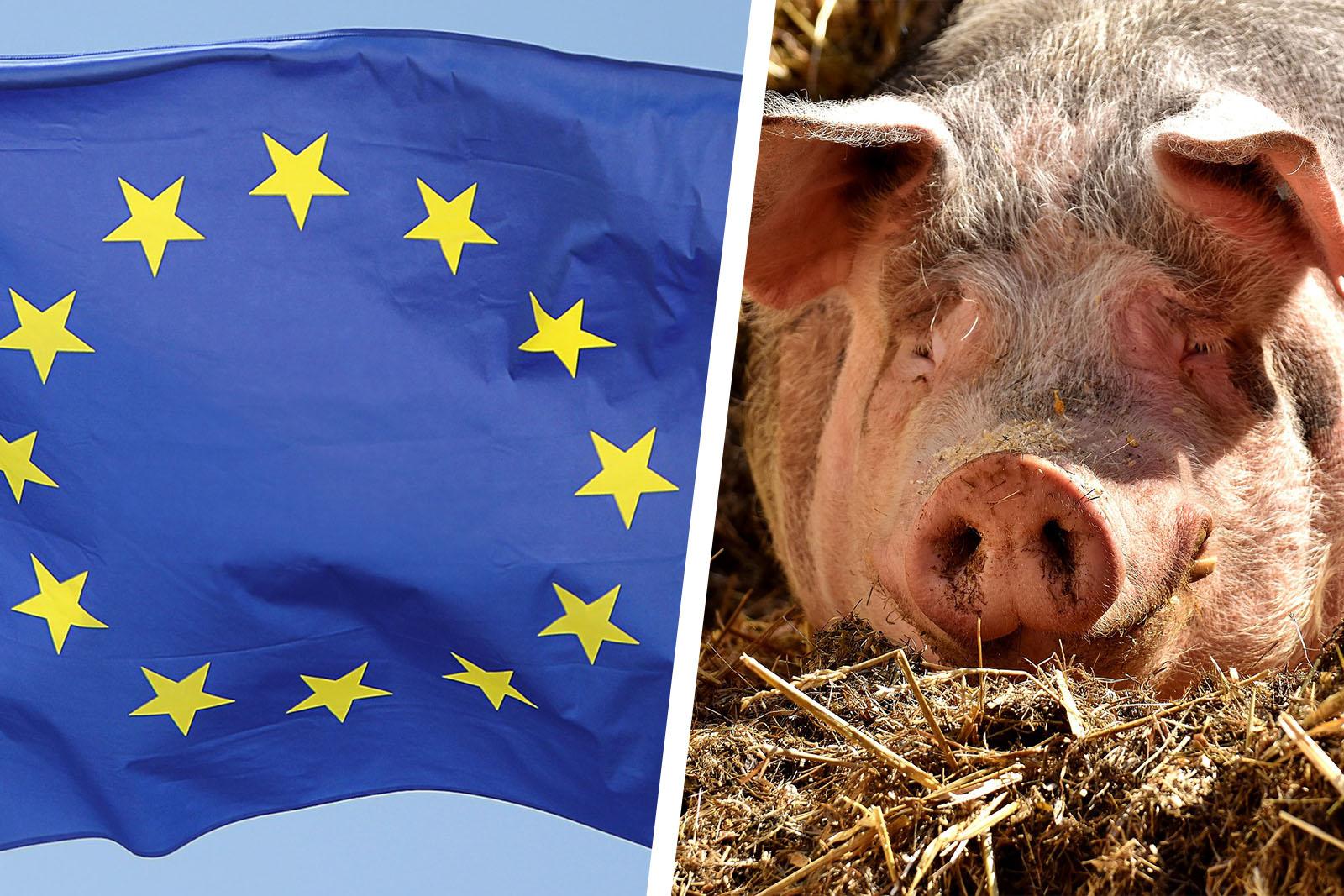 Keine Fünf-Prozent-Hürde bei Europawahl 2019: Kurze Tierschutzanalyse der Wahlprogramme