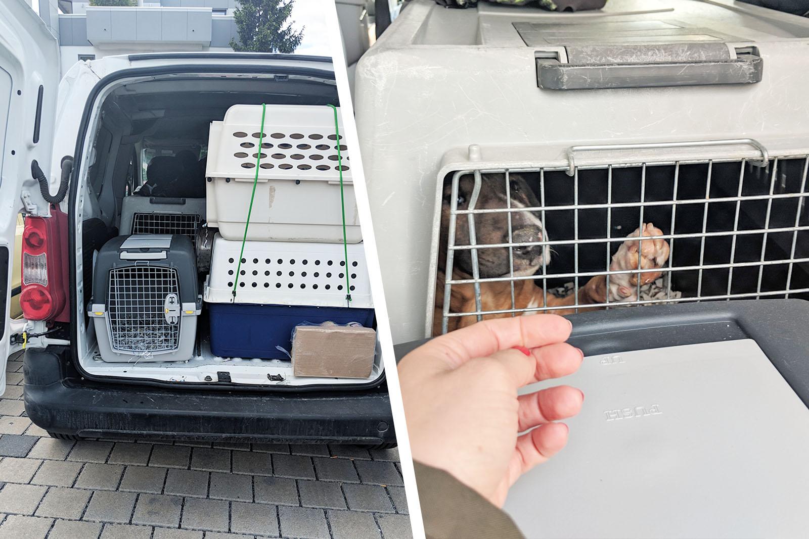 Hundebaby gerettet! Erneuter Schlag gegen Welpenmafia!