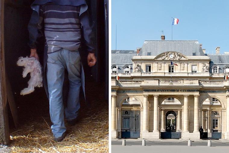 Tierquälerei für Angora: Tierrechtler verklagen französische Regierung