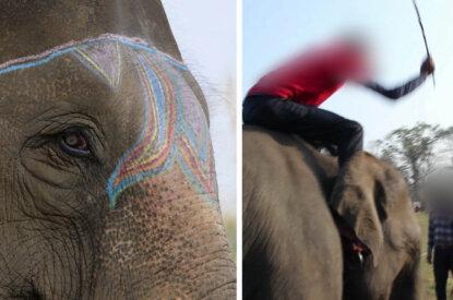 Mann schlaegt Elefant