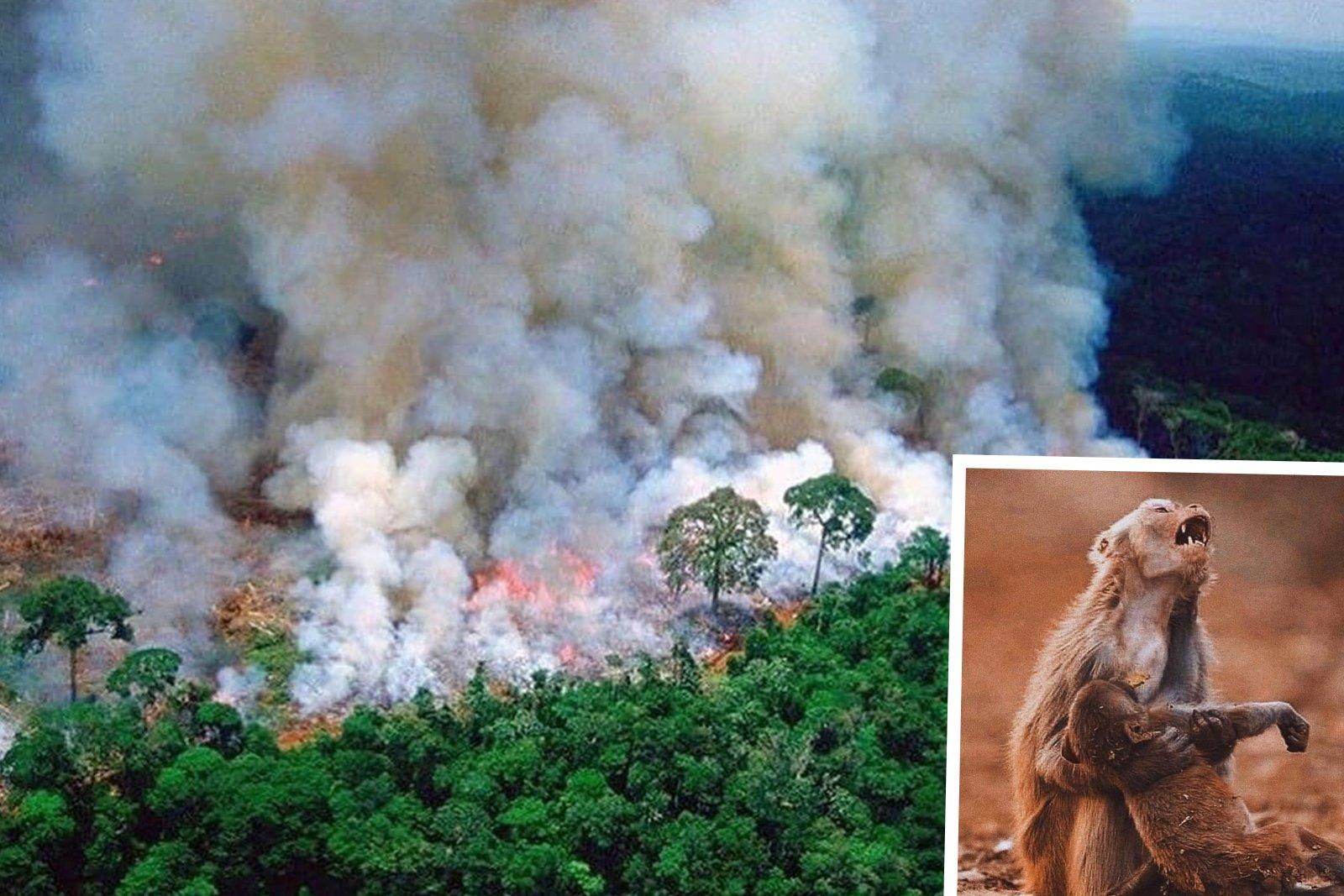 Was Ihr Fleischkonsum mit dem brennenden Regenwald zu tun hat