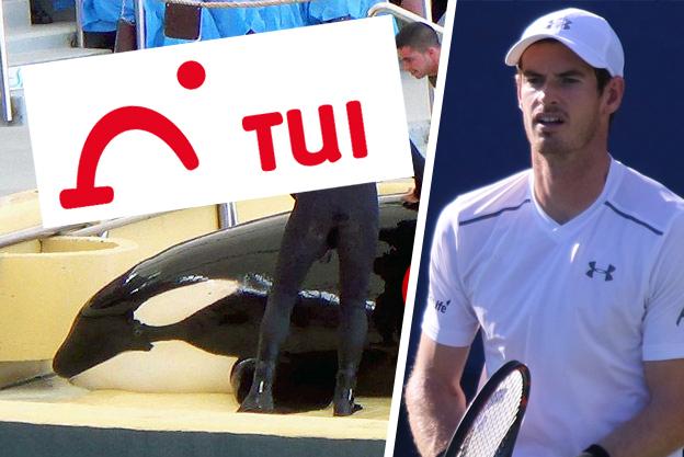 Andy Murrays Forderung an TUI: keine Reisen mehr zu SeaWorld!