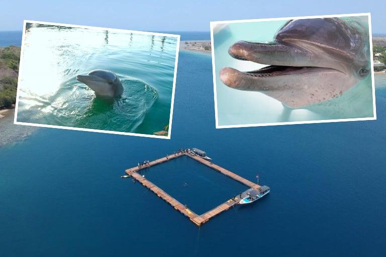 Auf Bali wurde das weltweit erste Delfin-Sanctuary eröffnet!