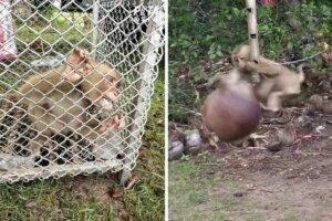 Eingesperrte und angekettete Affen