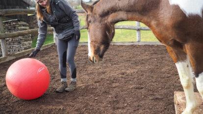 frau zeigt einem pferd einen großen Ball