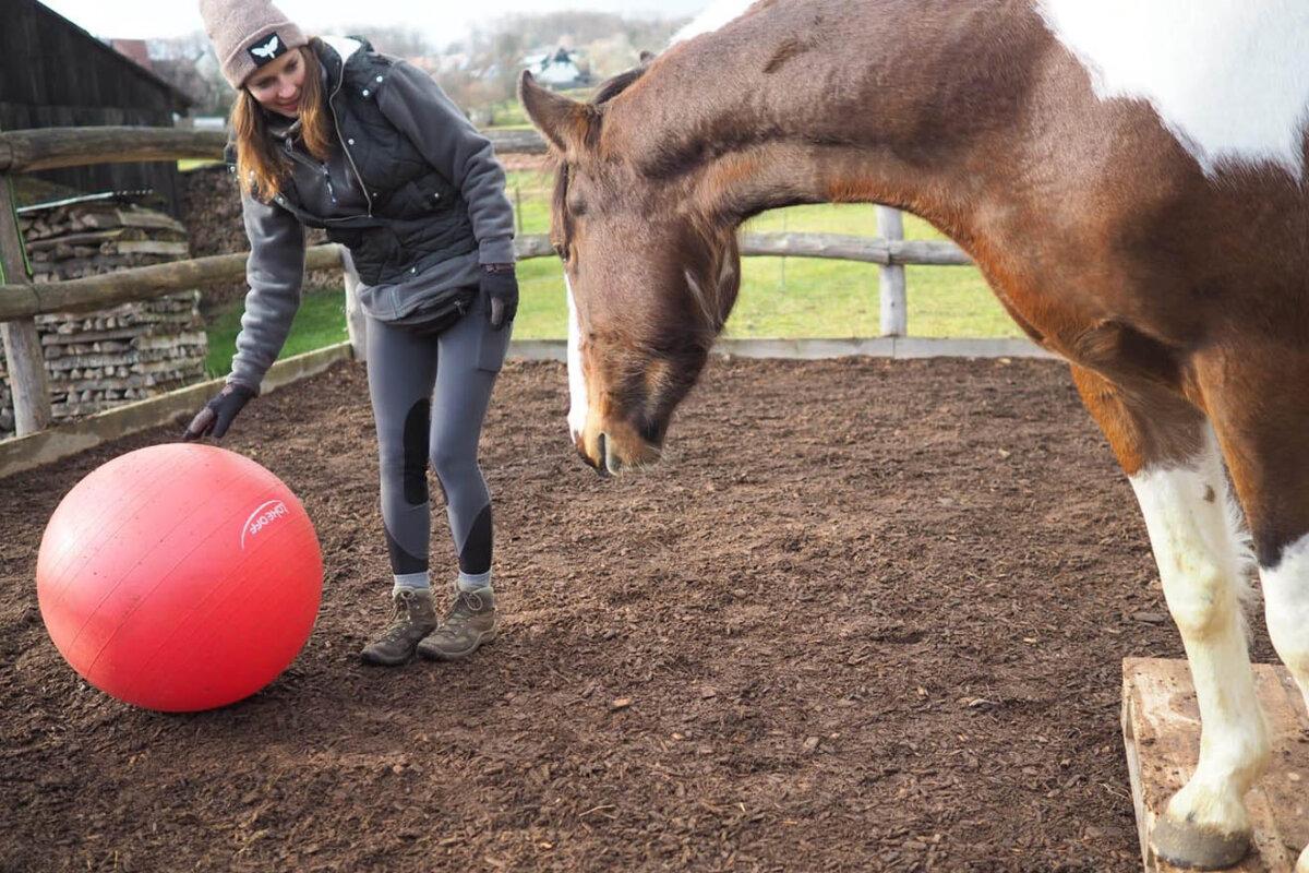 5 Tipps, wie Sie Pferde mit Achtsamkeit und Kreativität beschäftigen