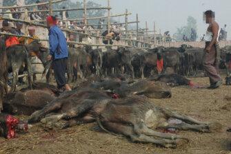 Gadhimai-Fest in Nepal beenden