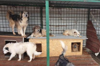 Hundehuetten und Hunde