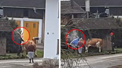 Bauer pruegelt Kuh