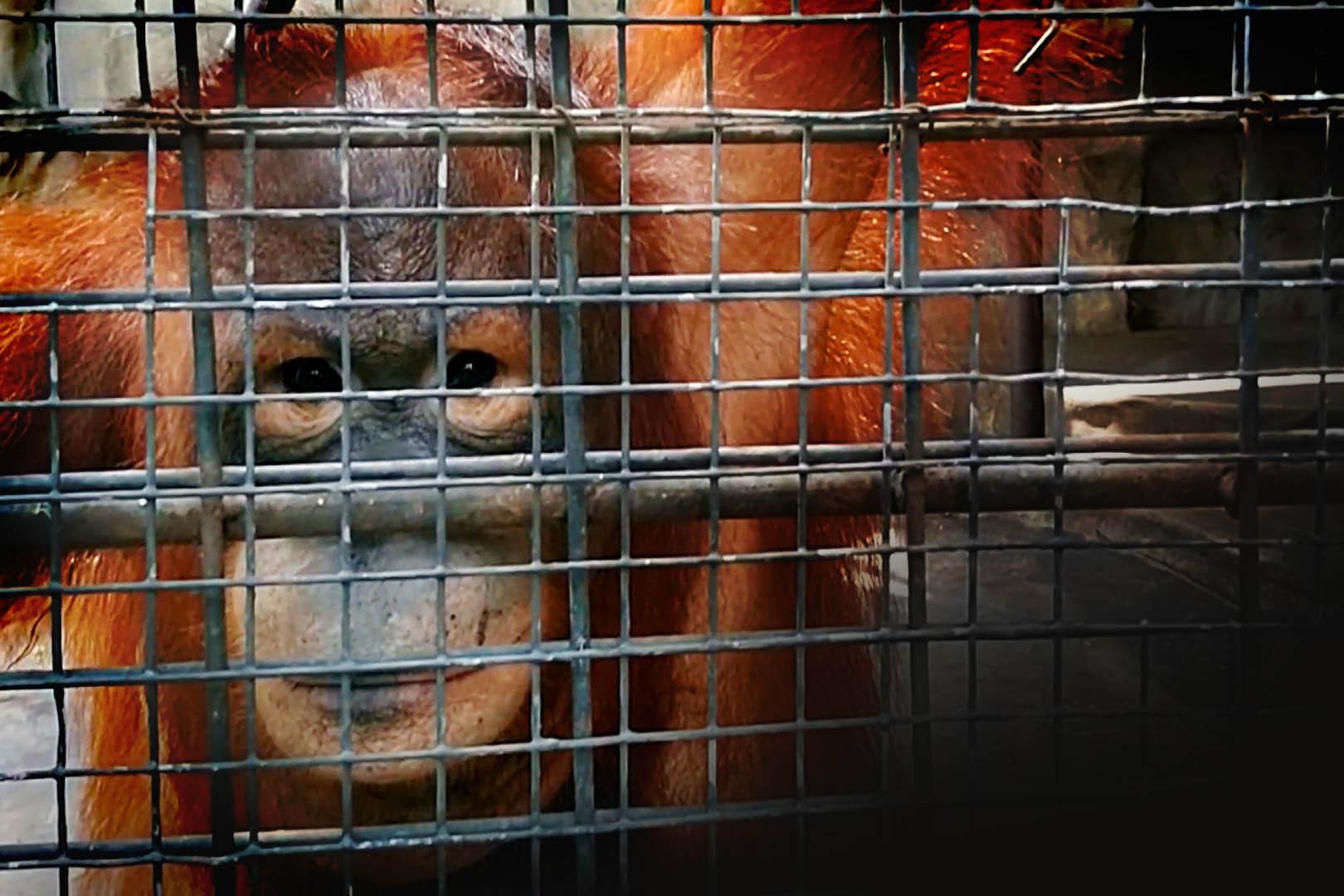Eingesperrten Tiere leiden im Pata Zoo – Helfen Sie jetzt!