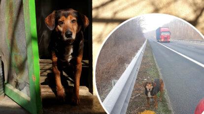 Hund Tony auf der Autobahn