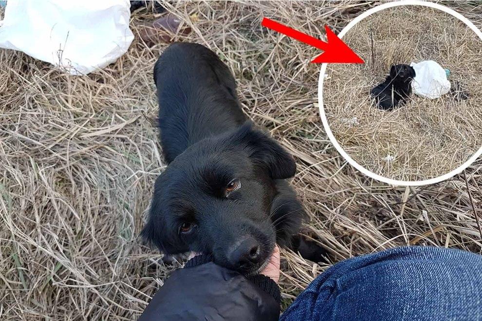 Dieser Hund wurde in einer Plastiktüte ausgesetzt – Lokis Geschichte