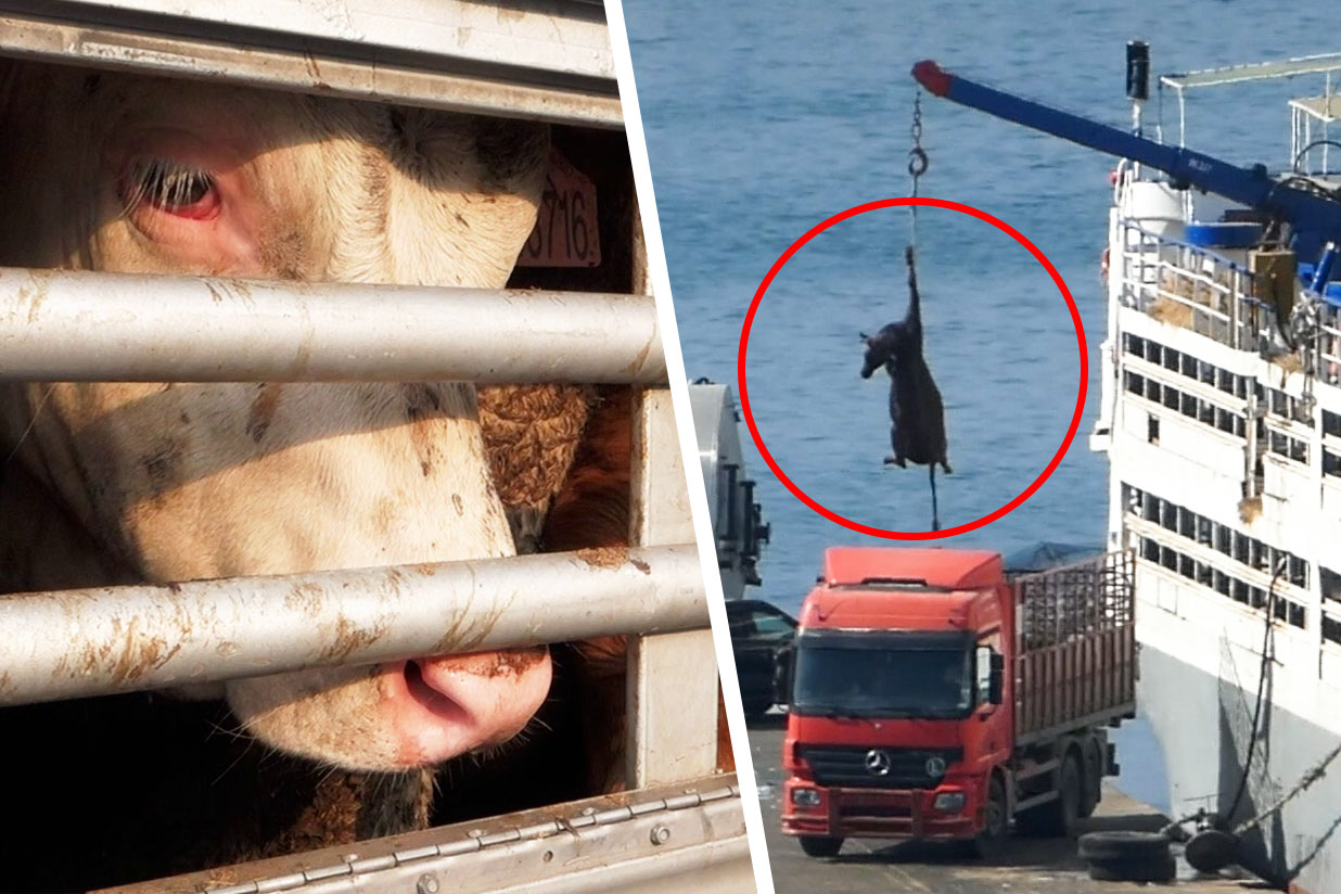 Tiertransporte Leder