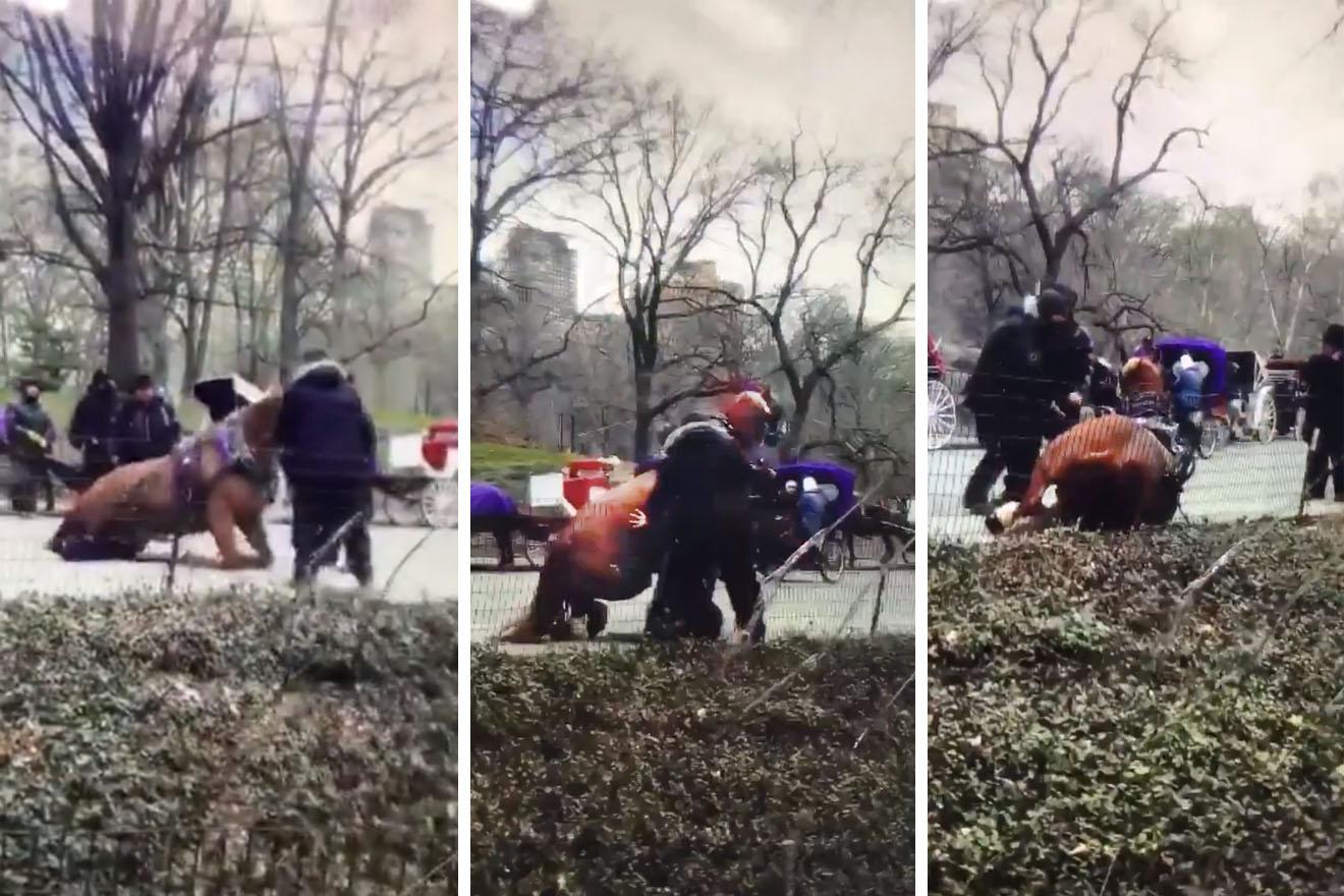 """VIDEO: Dieses """"Kutschpferd"""" bricht im Central Park zusammen"""