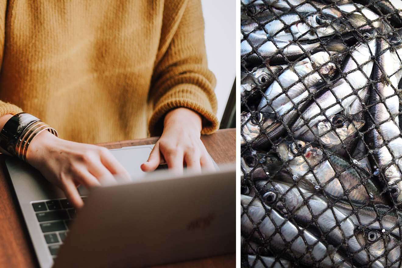 Welttag zur Abschaffung der Fischerei – wie Sie online aktiv werden können