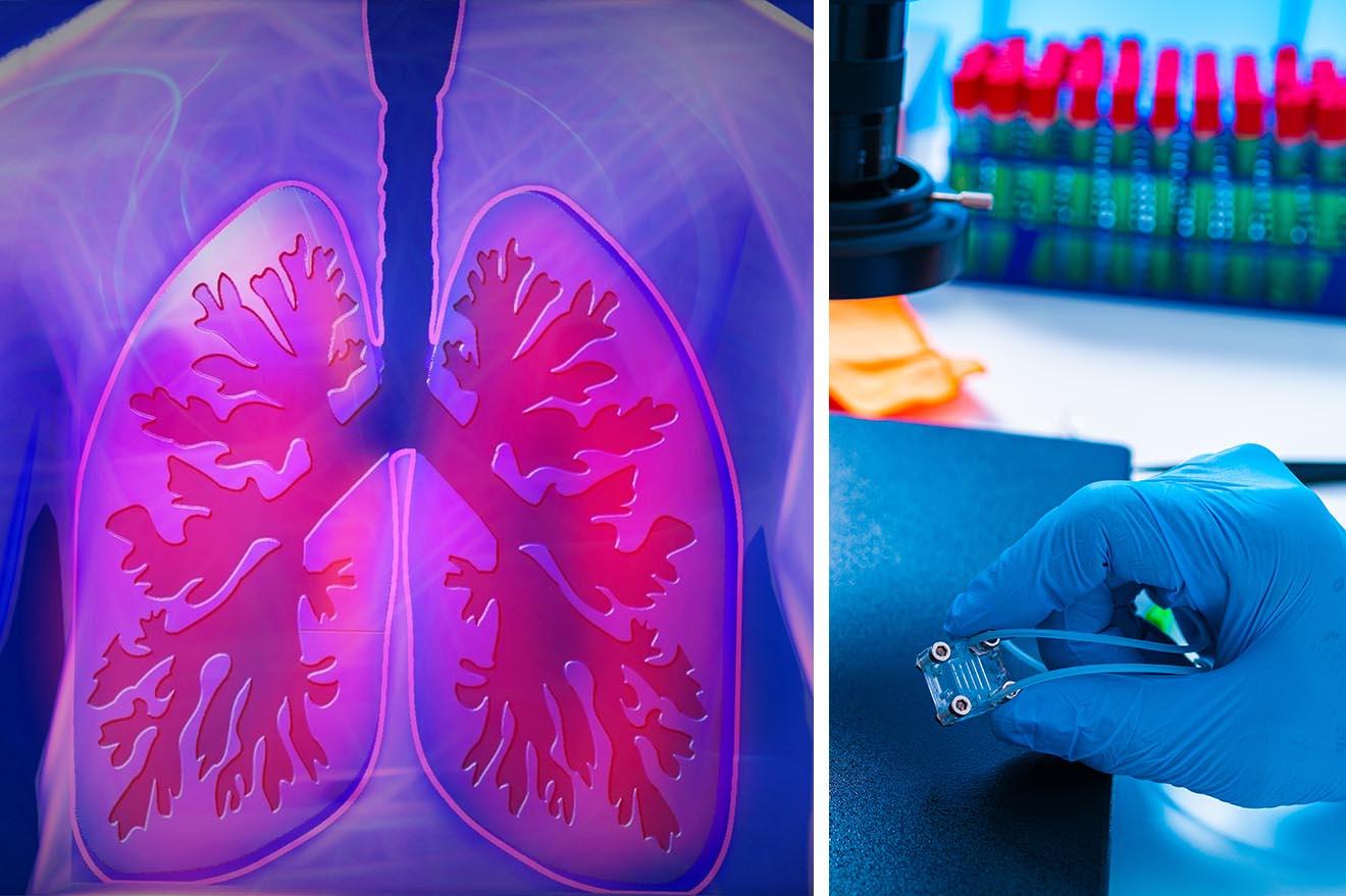 PETAs Wissenschaftsteam rettet Tiere mit neuem 3-D-Lungenmodell!