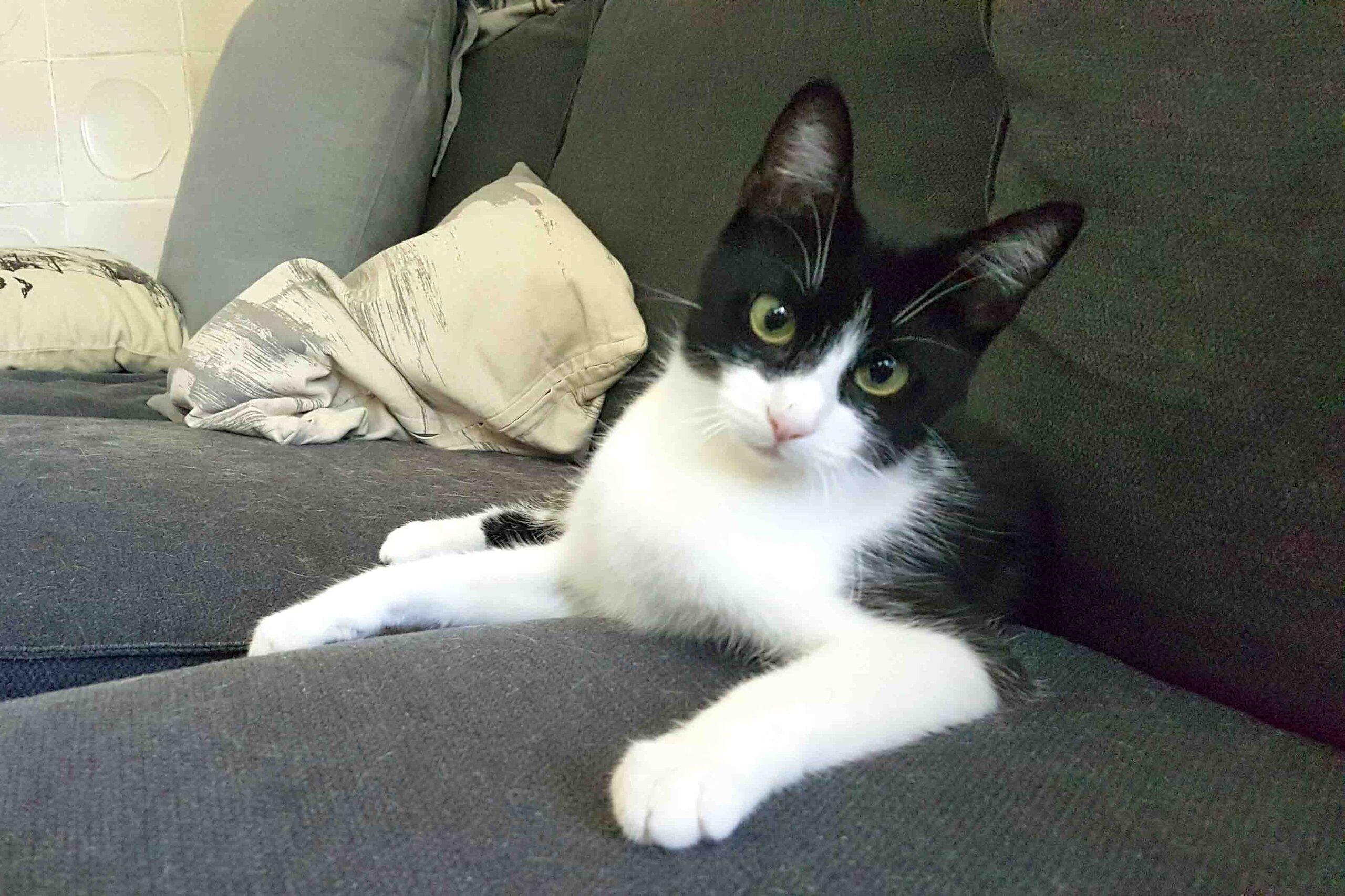 Madita – diese Katze wurde aus einem Animal-Hording-Fall adoptiert